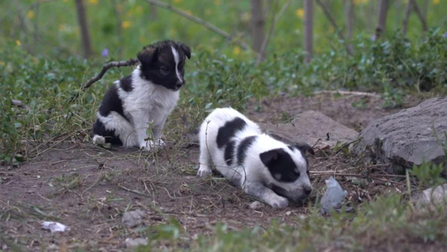 Perros radioactivos