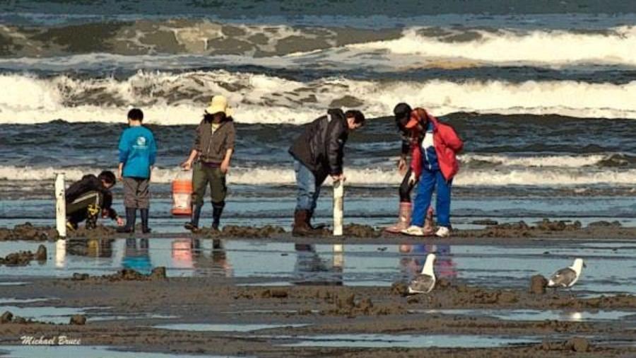 pescadores de almejas