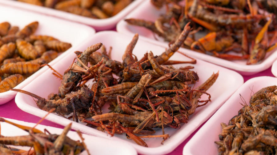 Plates of insects for sale in market.