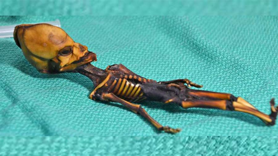 Revelan el genoma de un diminuto esqueleto llamado Ata