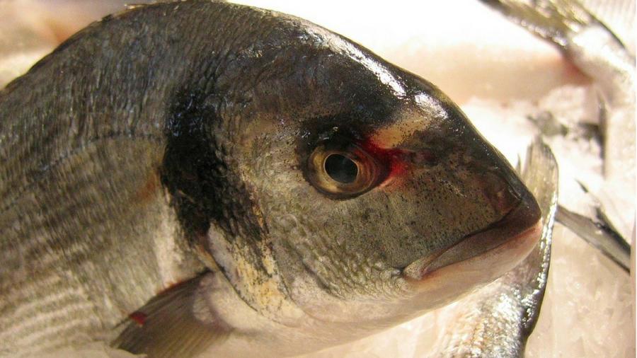 Durante el procedimiento se insertó un molde genital a la medida hecho con piel de la tilapia, un pez de agua dulce. (Fotografía ilustrativa)