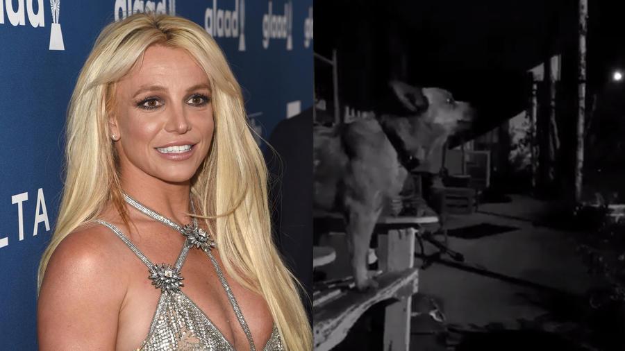 Britney Spears y perrito