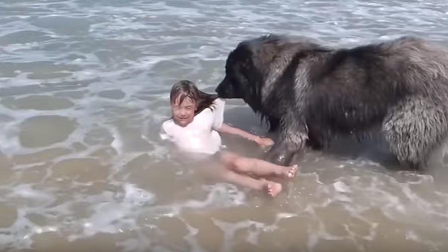 Perro rescata niña en el mar