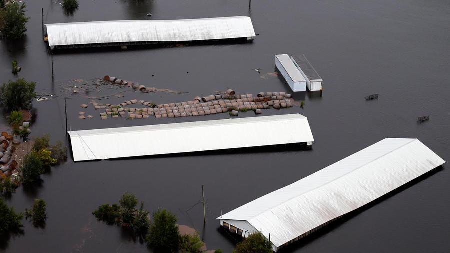 Una granja de cerdos inundada en Trenton, Carolina del Norte/AP