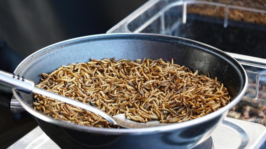 Gusanos de harina
