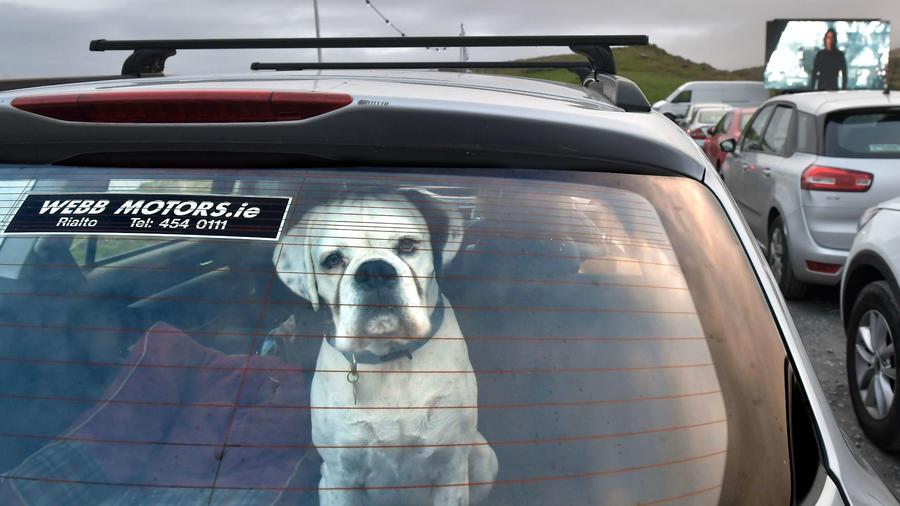 Perro en un carro