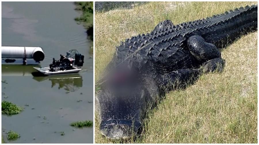 Cuerpo hallado flotando en un canal junto a un caimán en Florida