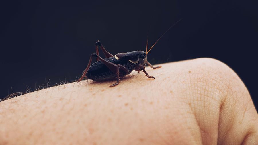 Mano con insecto