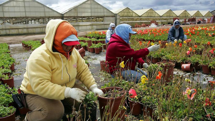 Imagen de archivo de trabajadores migrantes en California.