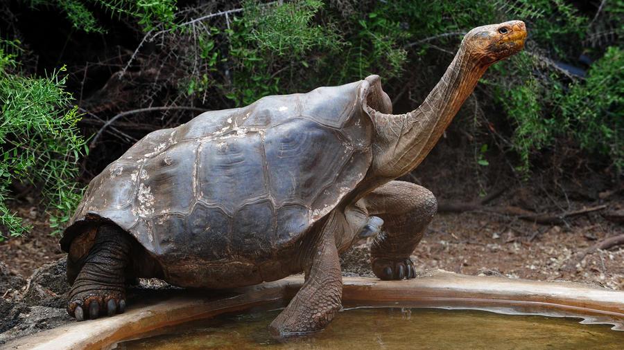 La tortuga gigante Diego en una imagen del año 2013.