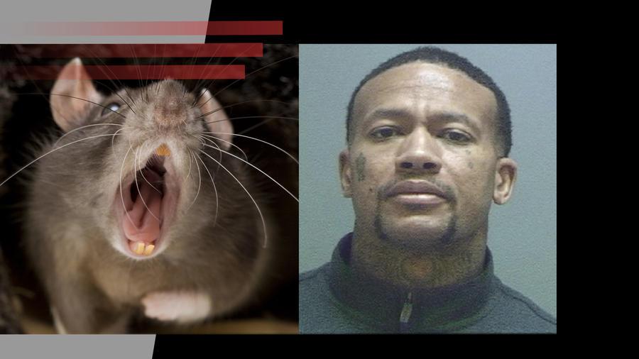 Estafador usaba ratas