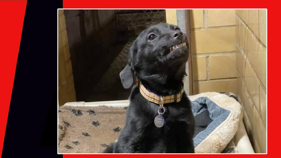 perro sonrisa adoptado