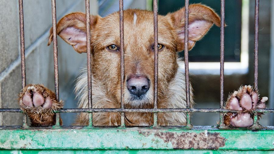 Prohibición perros gatos china