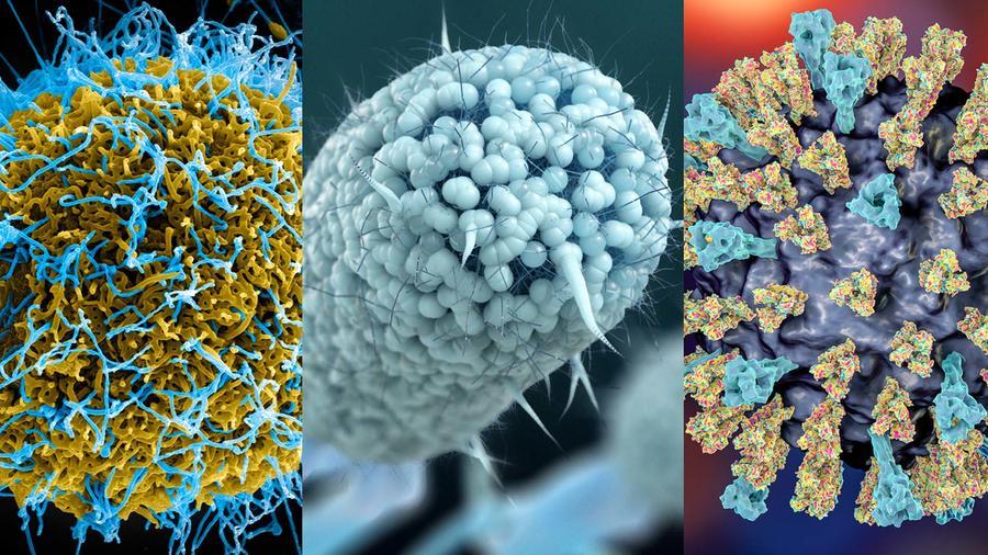 Bacterias y virus peligrosos