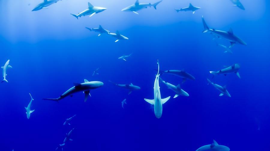 Refugio tiburones Colombia