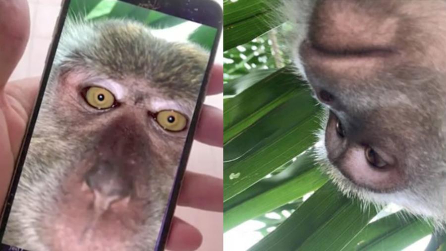 Mono se toma selfies