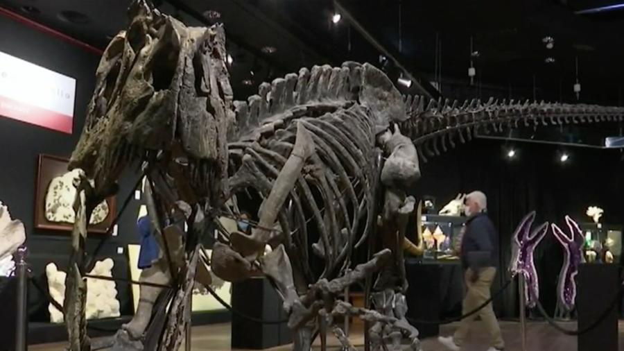 Dinosaurio fosilizado subastado