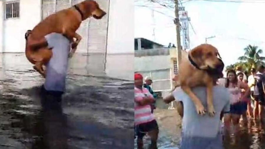 Perro inundaciones Tabasco