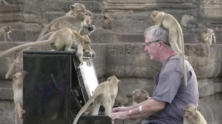 Pianista monos Tailandia