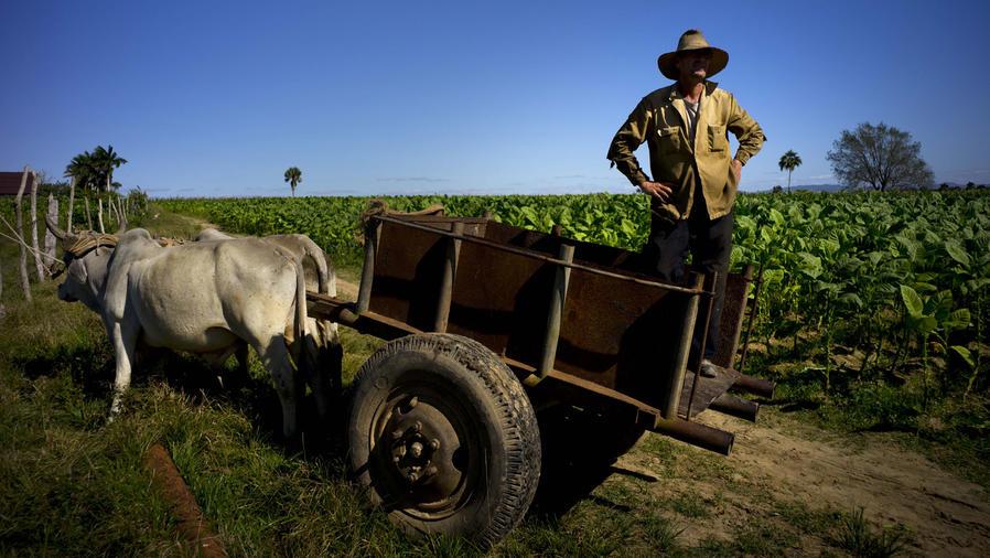 granjero tabaco