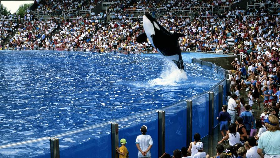 Orca saltando en Sea World