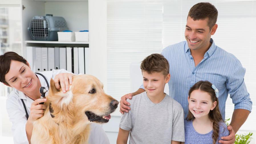Niños en el veterinario