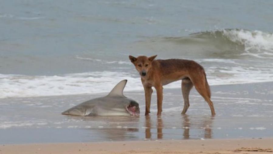 Animales aterradores que le han dado mala fama a Australia
