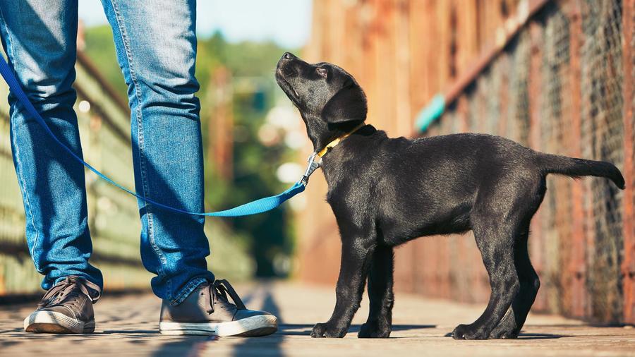 La Dra Marta Sánchez-Emden nos explica cómo proteger a las mascotas de pulgas y garrapatas