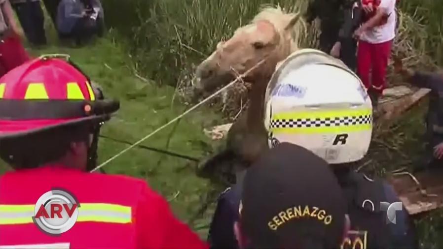 rescatan a caballo
