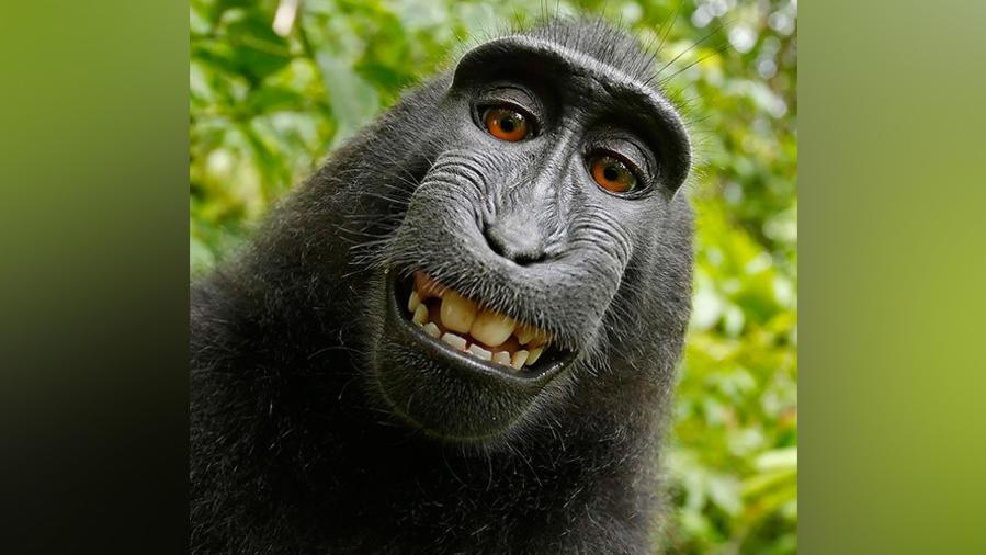 Naruto el mono, selfie