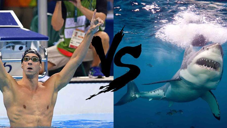 Michael Phelps y tiburón blanco