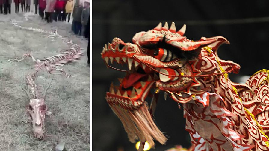 """Hallaron el esqueleto de un supuesto """"dragón"""" chino"""