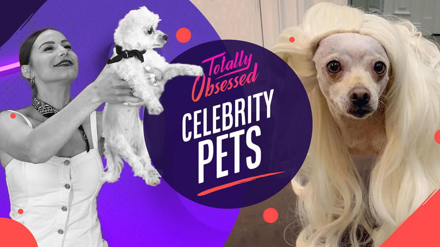Baguette, perro de Maolo Vergara y Nasstasja Bólivar en Totally obsessed