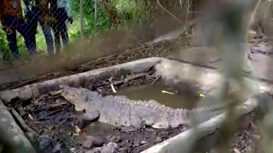 Incautan cocodrilos en la casa del expelotero José Rijo