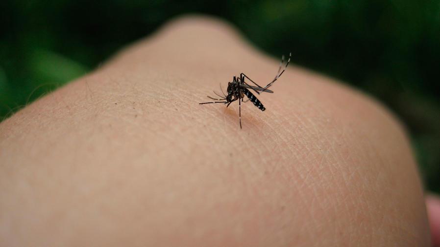 Esperanza ante vacuna contra el Zika