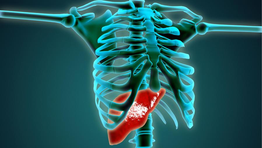 Esqueleto humano con el hígado en rojo