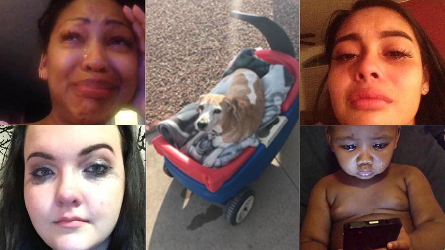Las fotos del último día de vida de este Beagle está conmoviendo a las redes sociales