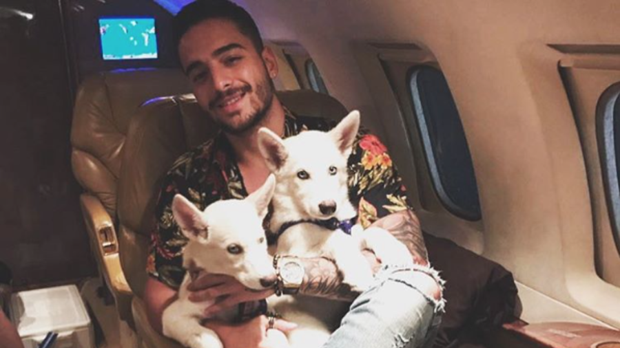 Maluma con sus perros