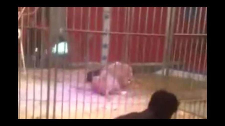 Hombre atacado por león