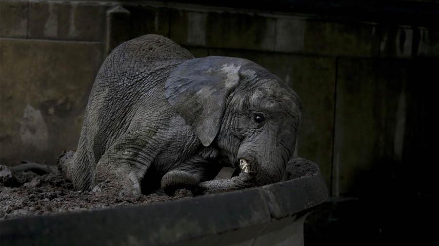 Un elefante en el zoológico transformado en parque en Buenos Aires, Argentina