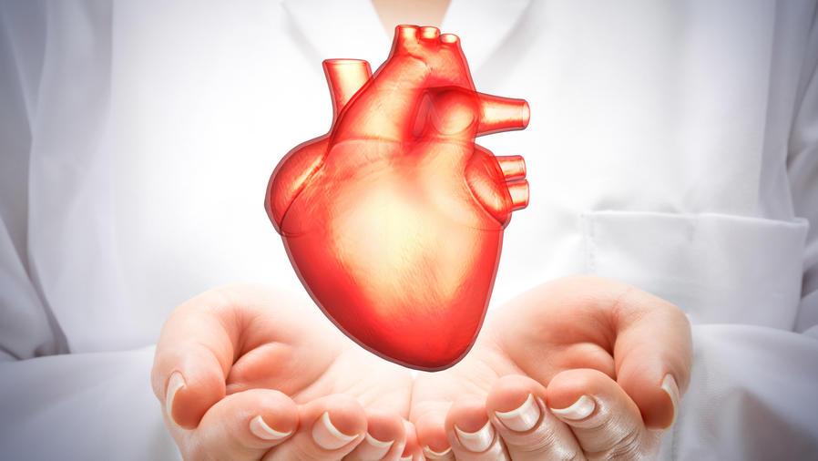 Mujer científica mostrando un corazón humano