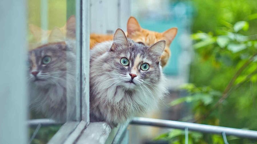 Imagen de arcihvo de gatos.