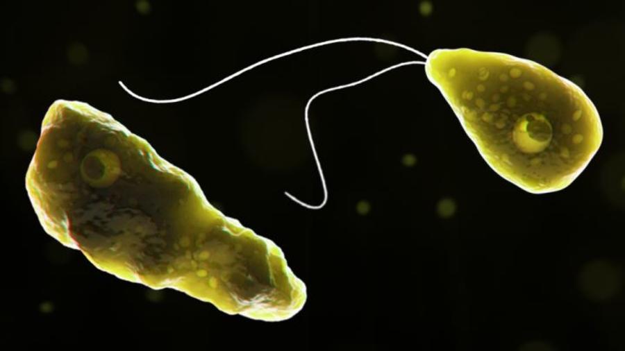'Naegleria fowleri', conocida como la ameba come cerebros, puede causar una infección rara y devastadora del cerebro.