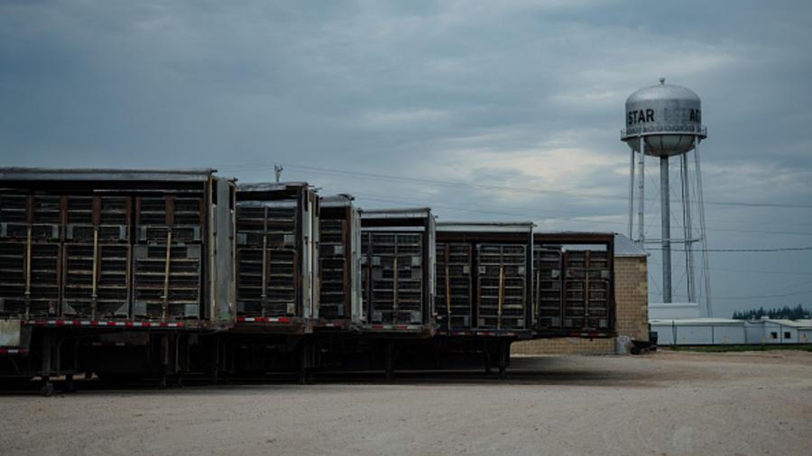Contenedores de pollos en las instalaciones de Agri Star en Postville, Iowa, en julio de 2020.