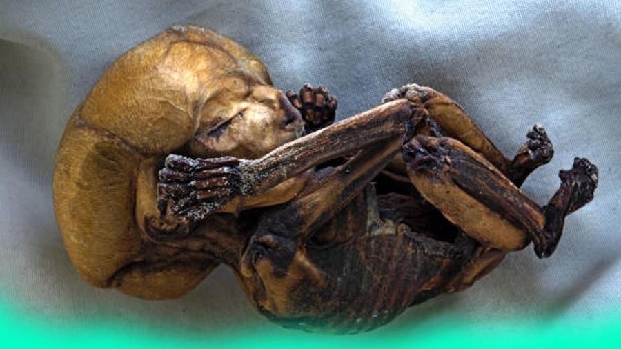 Energía de momias y muertos