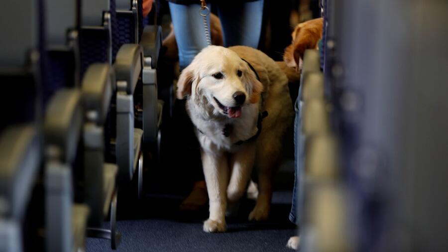 La suspensión temporal de importación de perros a Estados Unidos incluye a países como Rusia, India y China. Una docena de naciones latinoamericanas también están en la lista.