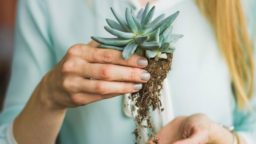 Mujer con planta en la mano