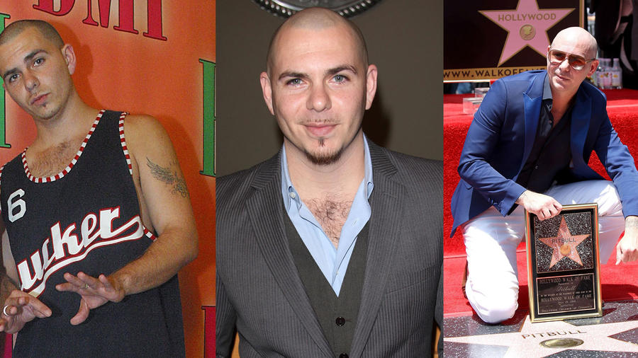 Pitbull collage
