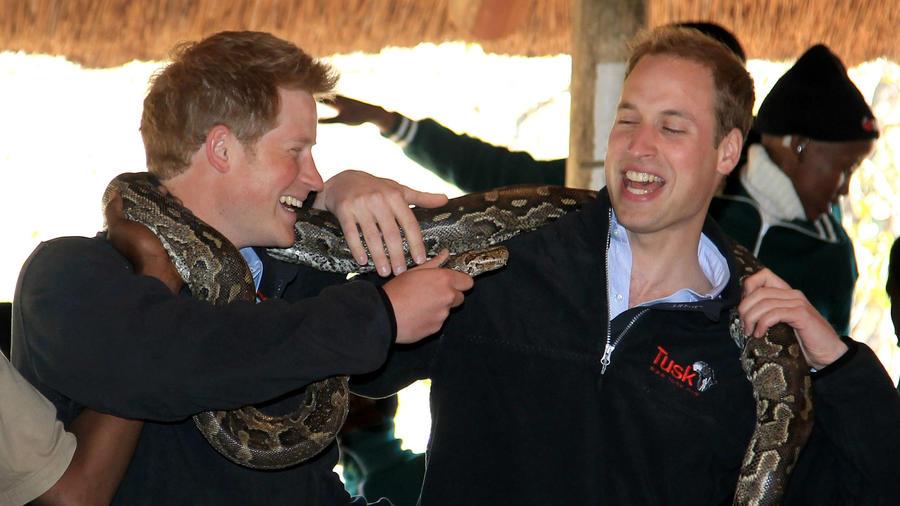 Príncipe Harry y Príncipe William cargando un pitón