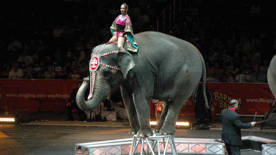 Ringling Bros elefante
